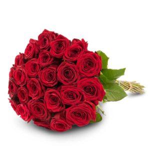 24 punaista ruusua