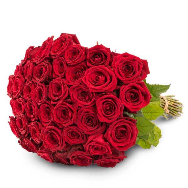 40 punaista ruusua