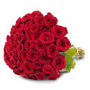 50 punaista ruusua