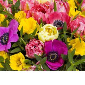 Keväinen värikäs kausikimppu, runsas