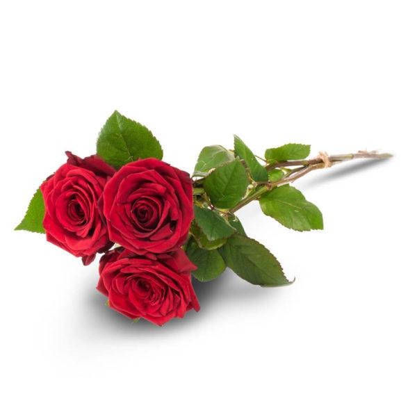Kolme punaista ruusua