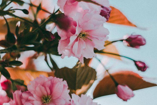 Kukkien symboliikkaa: Kuinka ilmaista kiintymystäsi kukkien avulla