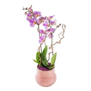 Orkidean taikaa