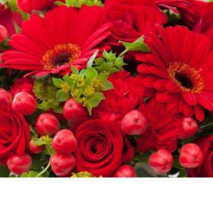Punainen kausikimppu, näyttävä