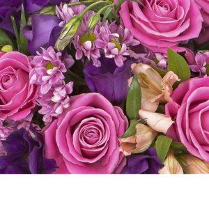 Roosa-lila kausikimppu, runsas