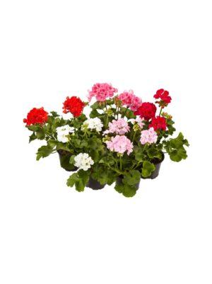 Kukat & kasvit