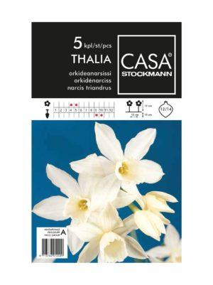 Orkideanarsissi-kukkasipulit