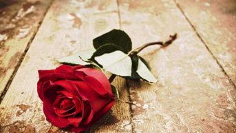 Kukka & Lahja Ruusu Oy
