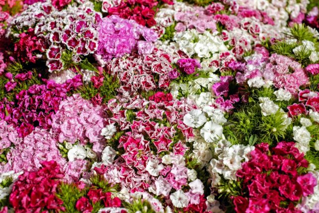 Mitä kukat kertovat antajastaan? 15 kukkaa joka symboloi rakkautta